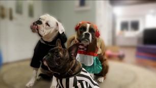 'Doggy Halloween Fashion Show (WK 304.2) | Bratayley'